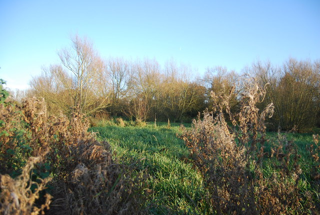Westbere Marshes