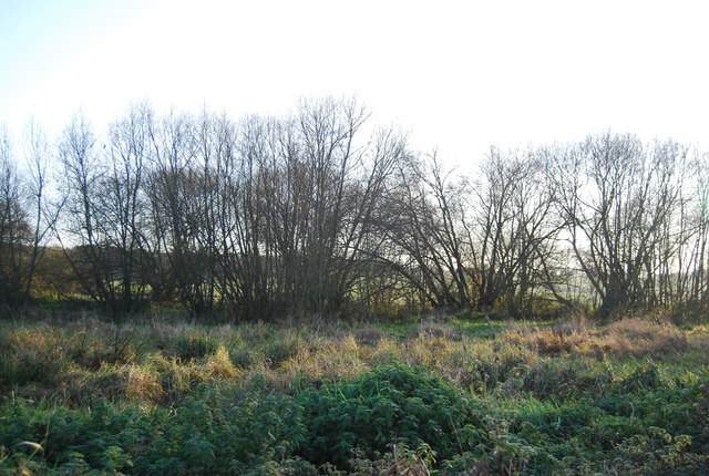 Trees by the Great Stour