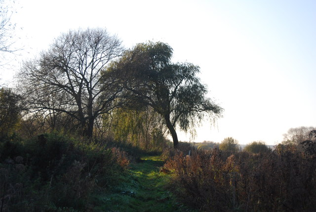 Trees by the path , Westbere Marshes