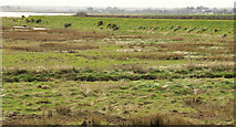 J4972 : Patton's Marsh, Newtownards by Albert Bridge