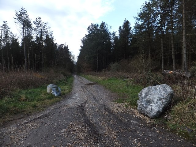 Three Tree Lane