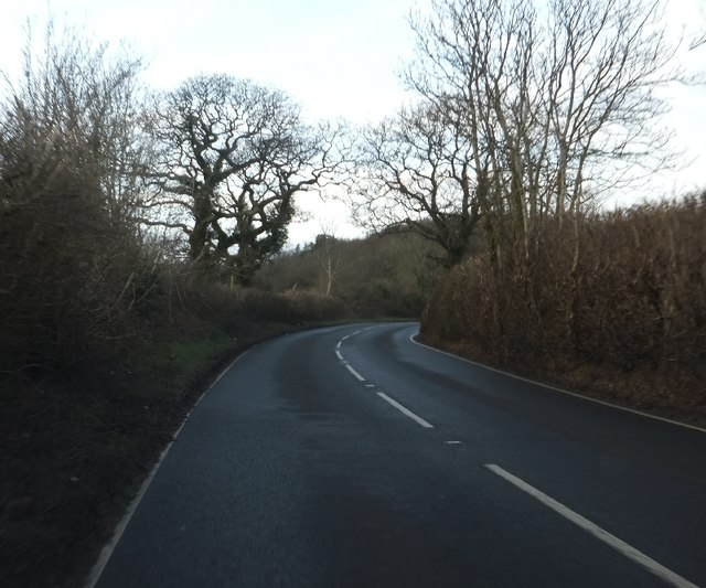 Colley Lane with winter trees