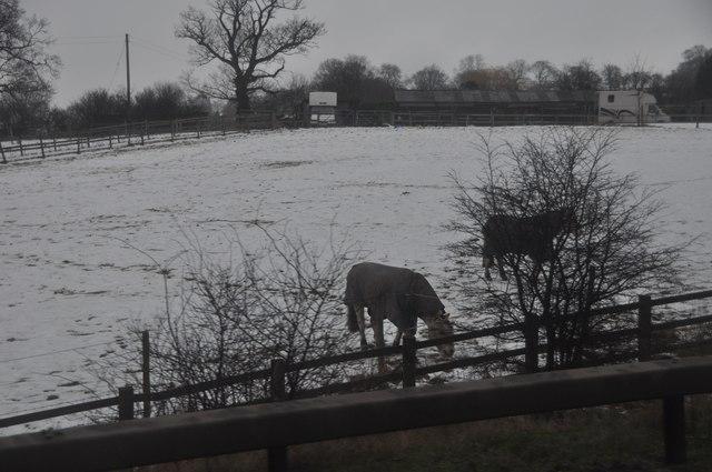 Bromsgrove : Snowy Field & Horses