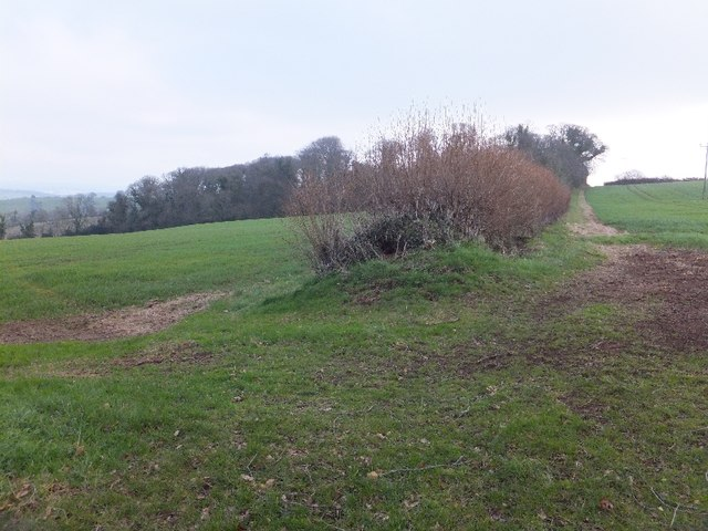 Hedge and Greenway Copse