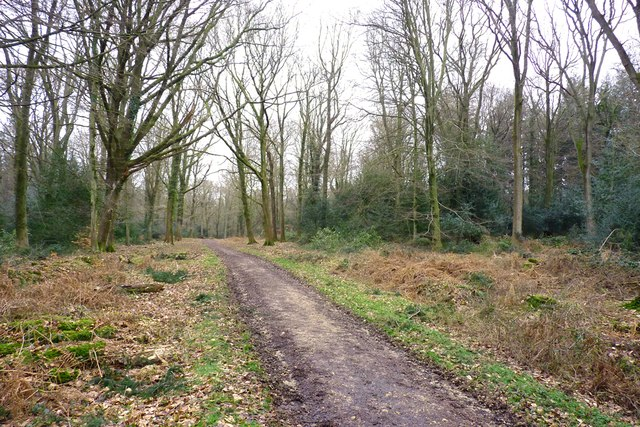 Path inside Broadley Inclosure