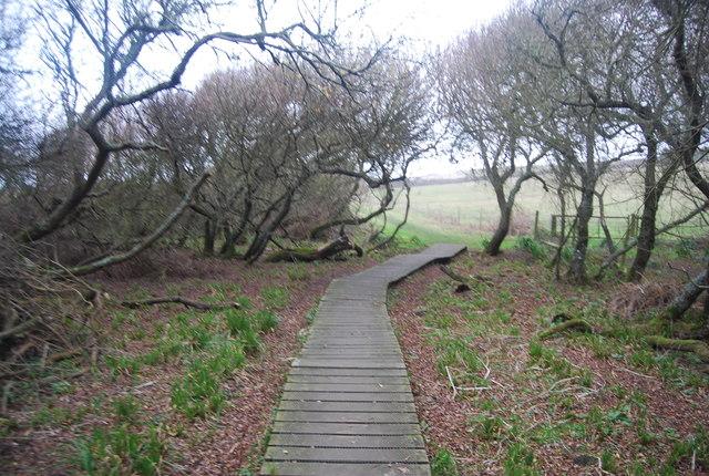 Boardwalk, South West Coast Path