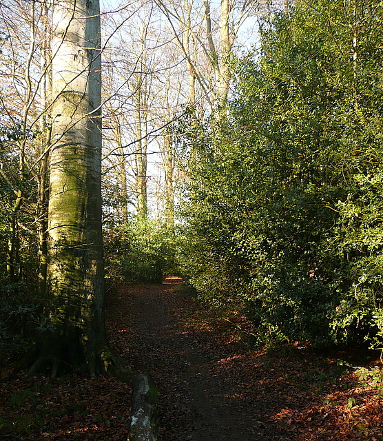 Footpath towards Amersham