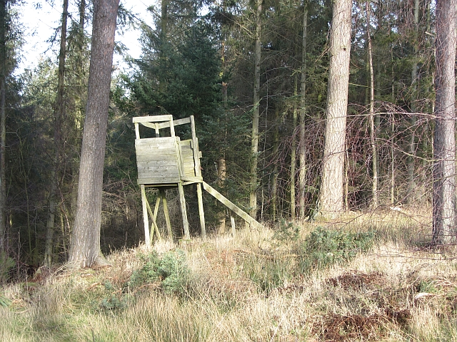 Decaying deer seat, Gowks Hill