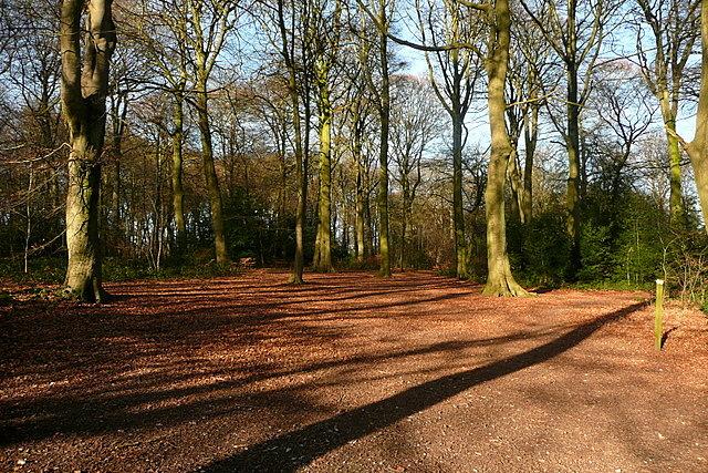 Parsonage Wood