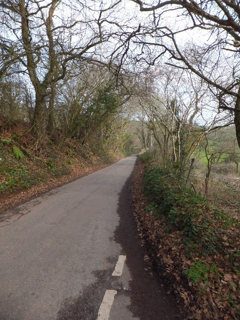 Bare trees beside road to Kennel Court