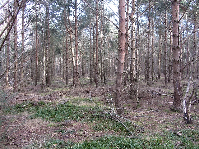 Coulston woodlands