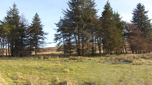 Woodland, Lairhill,  Sheriffmuir