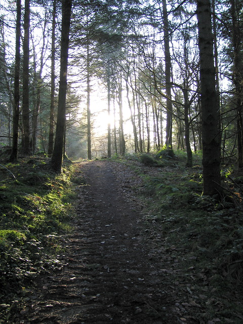 Forest path in Coed Tynybedw
