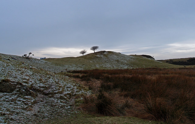 Two Hawthorn Trees