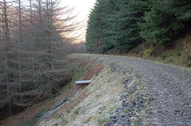 Forest road, Cairn Hill