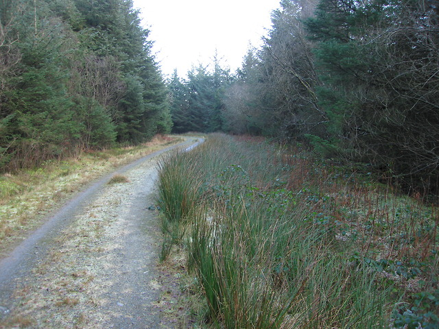 Forest track in Coed Craigyrogof