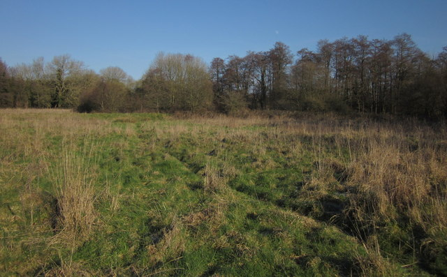 Meadow by the Culm