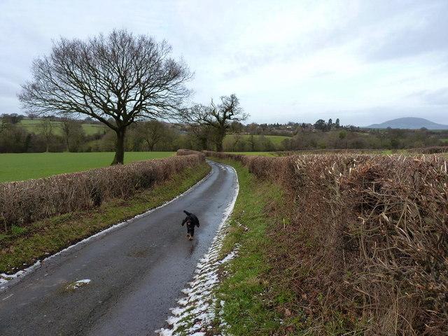 The lane from Rowley Farm towards Harley