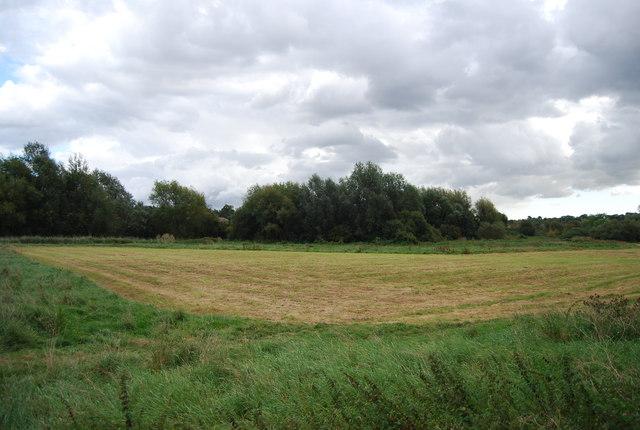 Bramford Meadows