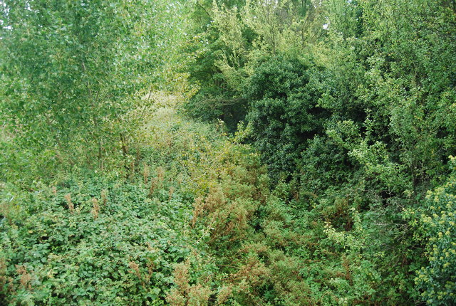 An overgrown channel of the River Gipping
