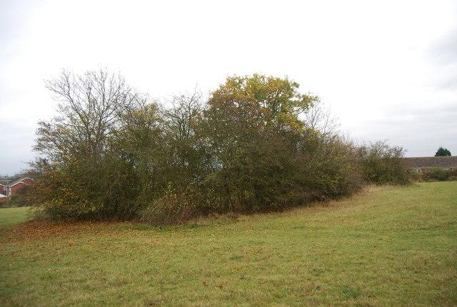 Bushes by the Saxon Shore Way