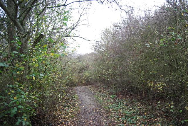 Saxon Shore Way in High Halstow NNR