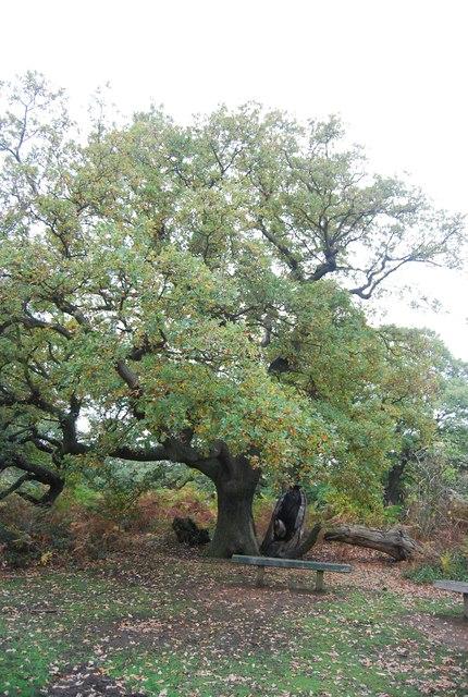 Bench below an Oak