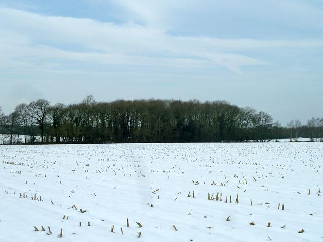 Across a snowy field