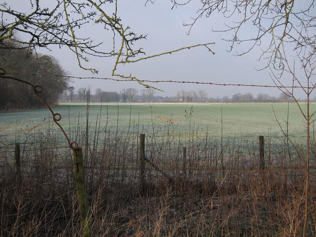 Fields by Milton Tip