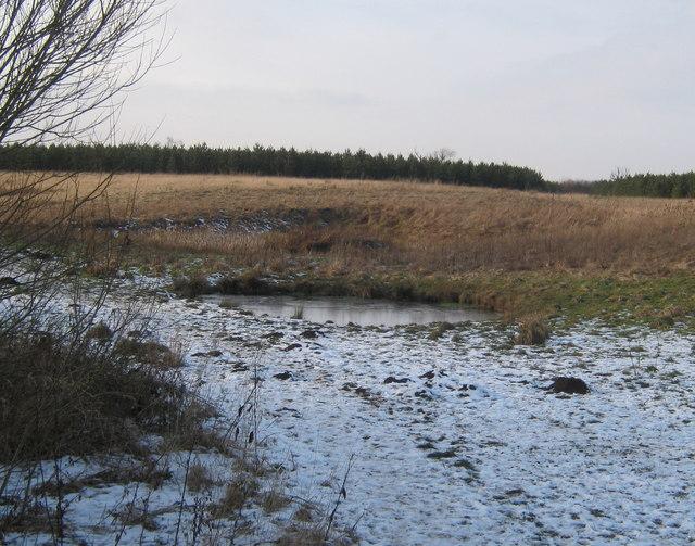 Pond in Coatham Wood