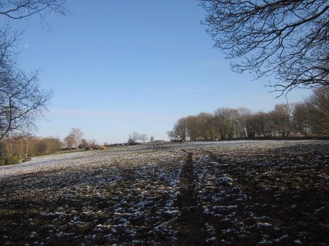 Snowy field on Hackpen Hill
