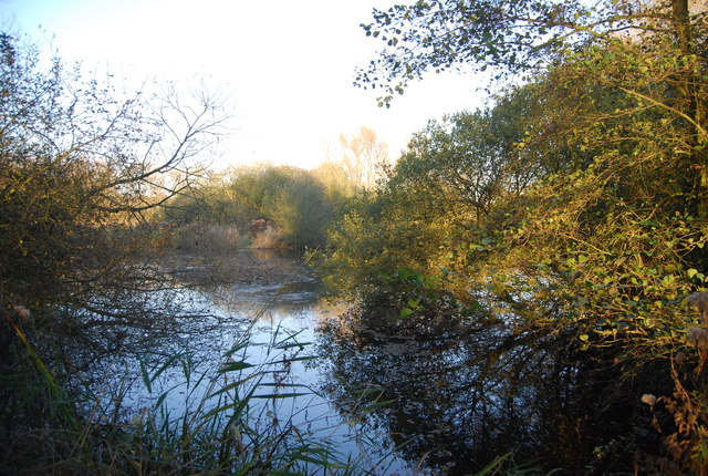 Pond, Westbere Marshes