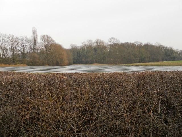 Lake at Cawston Wood
