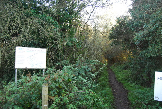 Footpath into Westbere Marshes