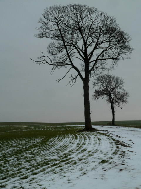 Winter trees in a large field