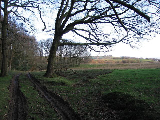 Track towards Ysbyty Ystwyth