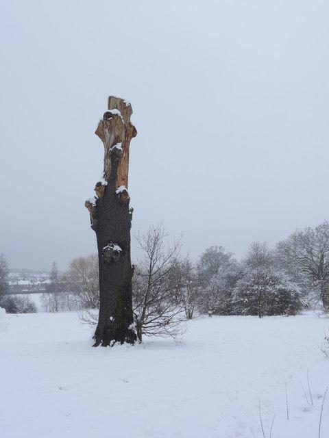 Dead Tree, Oakwood Park, London N14