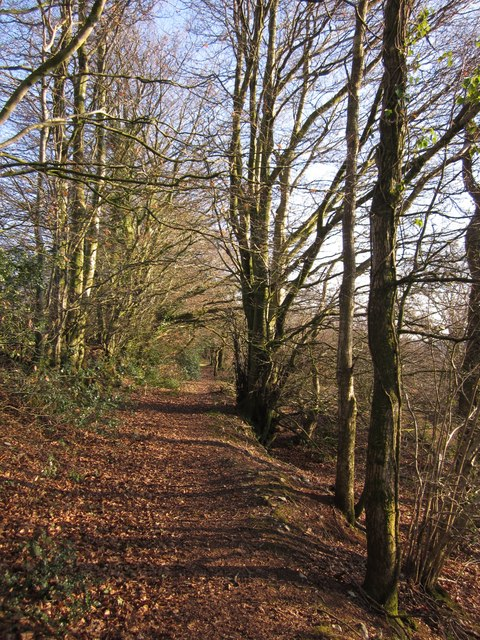 Woodland path on Hackpen Hill