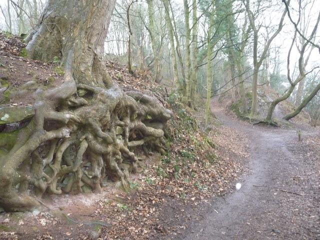 Path in Corbett Wood, Grinshill