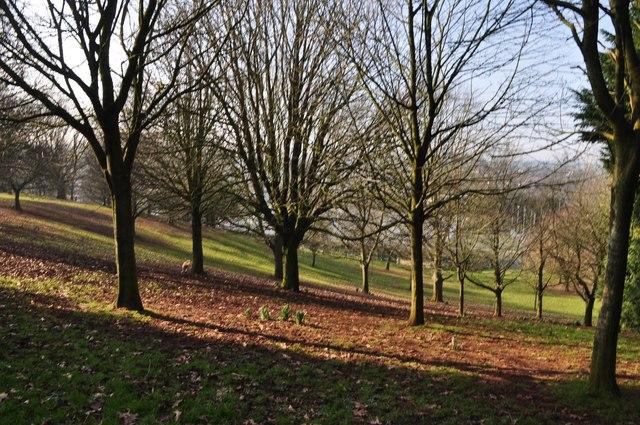 Tiverton : Grassy Hillside