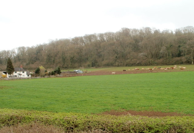 A view south from the A48 towards Lower Rodge Wood