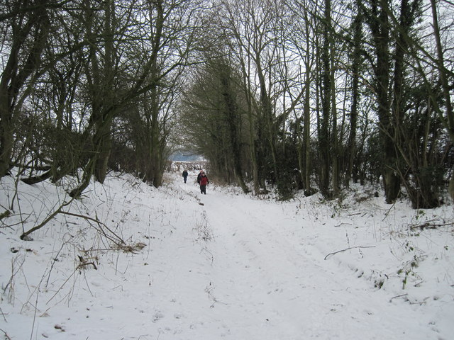 A  Snow  Covered  Crook  Lane