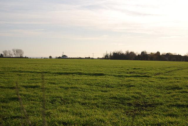 Grassy fields, Old Tree Rd