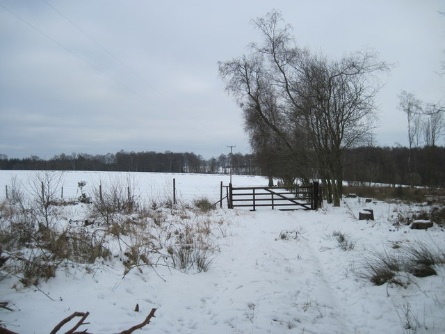 Snow  Field  and  Woodland