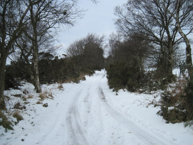 Track  to  Middle  Head  Road