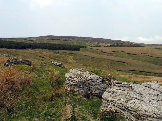 Limestone outcropping along line of shake holes