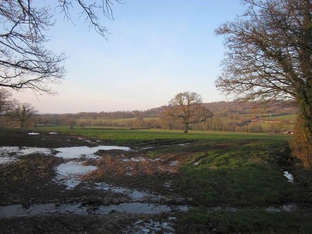 Field by Hayne Cross