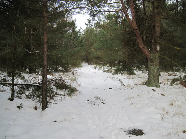 Path  through  woods  on  Stony  Moor