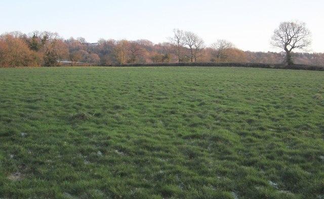 Pasture near Bodmiscombe