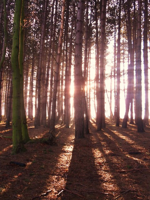 Wheatley wood.